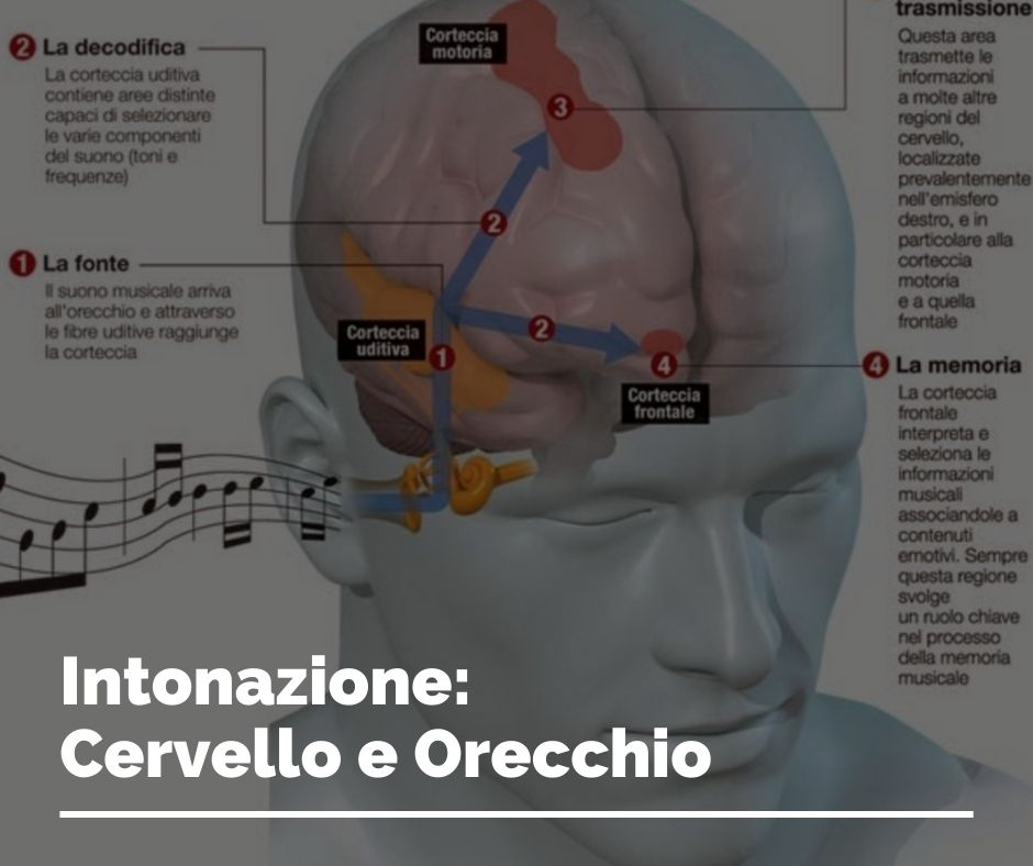 Intonazione: Cervello e Orecchio